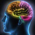 brain, mind, human